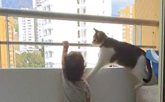 Video: Thấy đứa trẻ muốn trèo khỏi lan can tầng cao, chú mèo có hành động khó tin