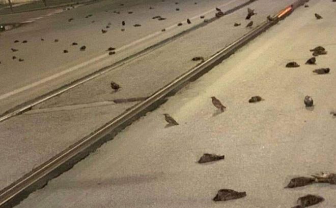 """Chim chóc bỗng nhiên chết la liệt trên đường phố tại Ý, nguyên nhân vì một """"đặc sản"""" có trong đêm giao thừa"""