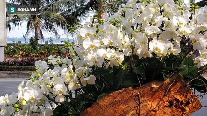 Ngắm lan hồ điệp độ gỗ hương đẹp lạ, chờ đại gia Việt chưng Tết - Ảnh 2.