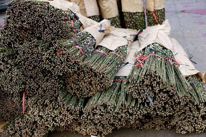 Chợ hoa đào nhuộm khoe sắc rực rỡ ở Đầm Sen - Ảnh 2.