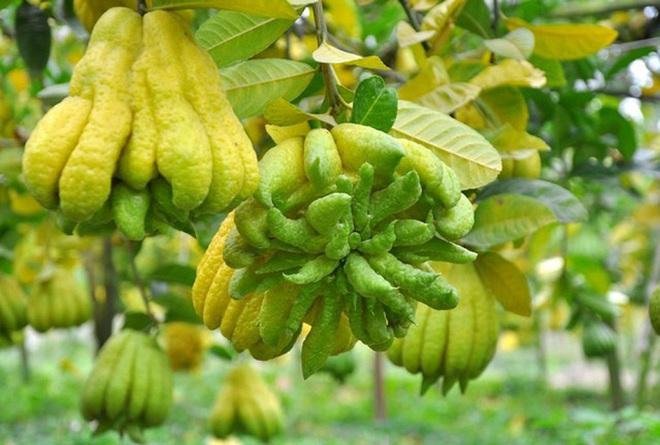 Gợi ý 5 loại quả Tết không đụng hàng, ẩn chứa hàm ý tốt đẹp trong năm mới Tân Sửu - Ảnh 4.