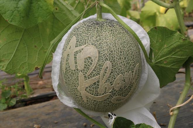 Gợi ý 5 loại quả Tết không đụng hàng, ẩn chứa hàm ý tốt đẹp trong năm mới Tân Sửu - Ảnh 6.