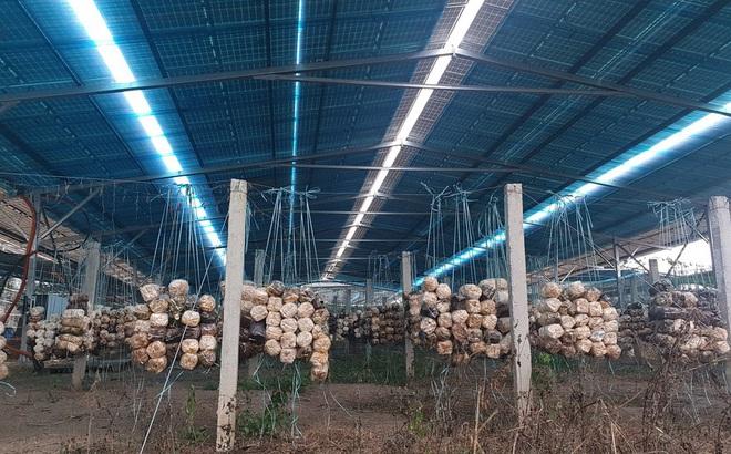 Bóc mẽ loạt dự án điện mặt trời 'núp bóng' nông nghiệp được hợp thức hóa