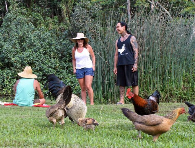 Thiên đường du lịch Hawaii biến thành nơi cư trú của hàng nghìn con gà rừng  - Ảnh 3.