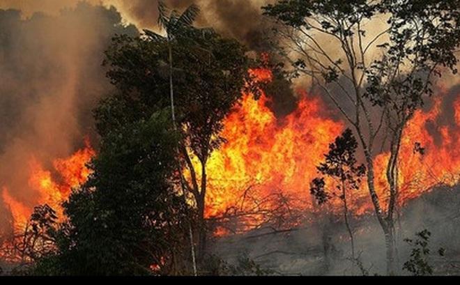Diện tích rừng Amazon ngày càng bị thu hẹp