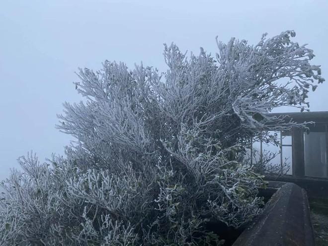 Cận cảnh băng giá phủ trắng đỉnh Mẫu Sơn, Yên Tử, Phia Oắc, du khách thích thú chụp ảnh - Ảnh 4.