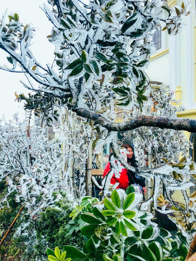 Ùn tắc đèo Ô Qúy Hồ - Sa Pa do nhiều du khách đổ lên xem băng tuyết - Ảnh 4.