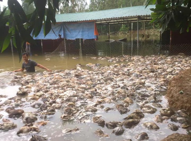 Thủy Tiên cứu trợ lũ ở Nghệ An, Hà Tĩnh: Nhiều người khóc khi nhận hàng trăm triệu đồng để trả nợ - Ảnh 2.