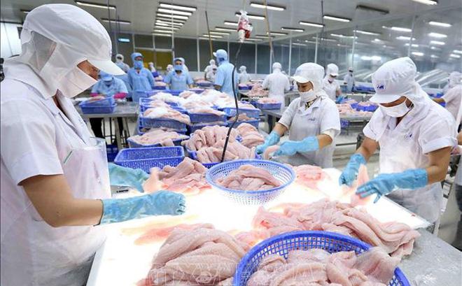 Campuchia bỏ lệnh cấm nhập khẩu 4 loại cá từ Việt Nam