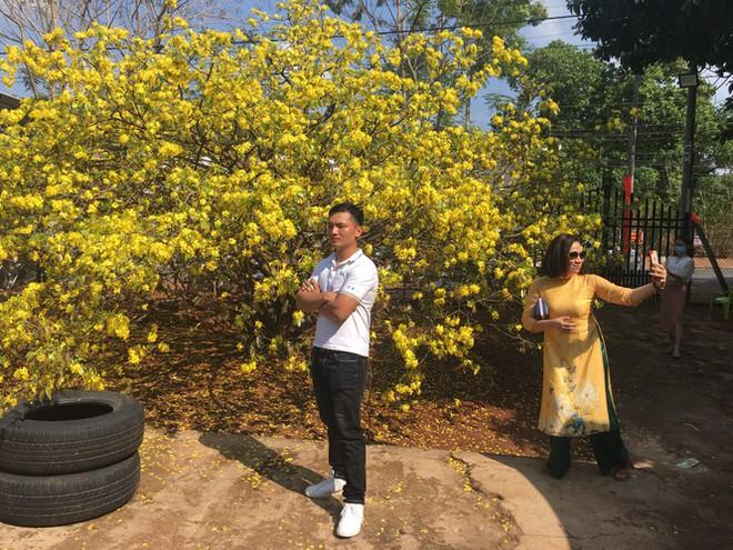 Nườm nượp du khách đến check-in tại cây mai vàng 57 tuổi ở Đồng Nai - Ảnh 2.
