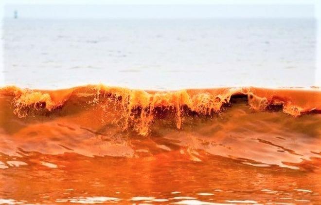 Top 10 hiện tượng kỳ thú của đại dương - Ảnh 8.