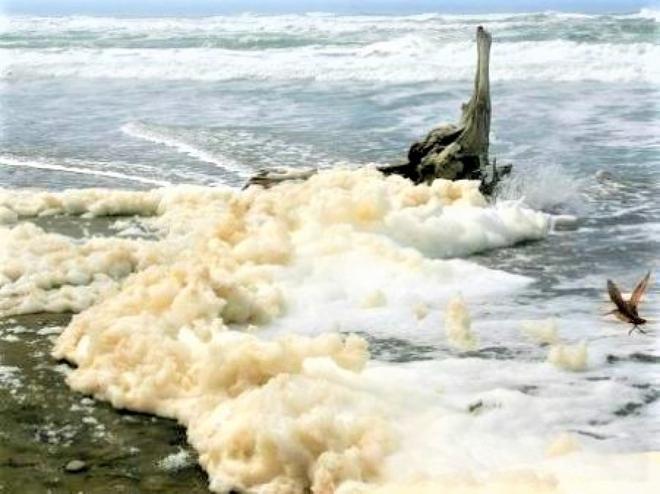 Top 10 hiện tượng kỳ thú của đại dương - Ảnh 9.