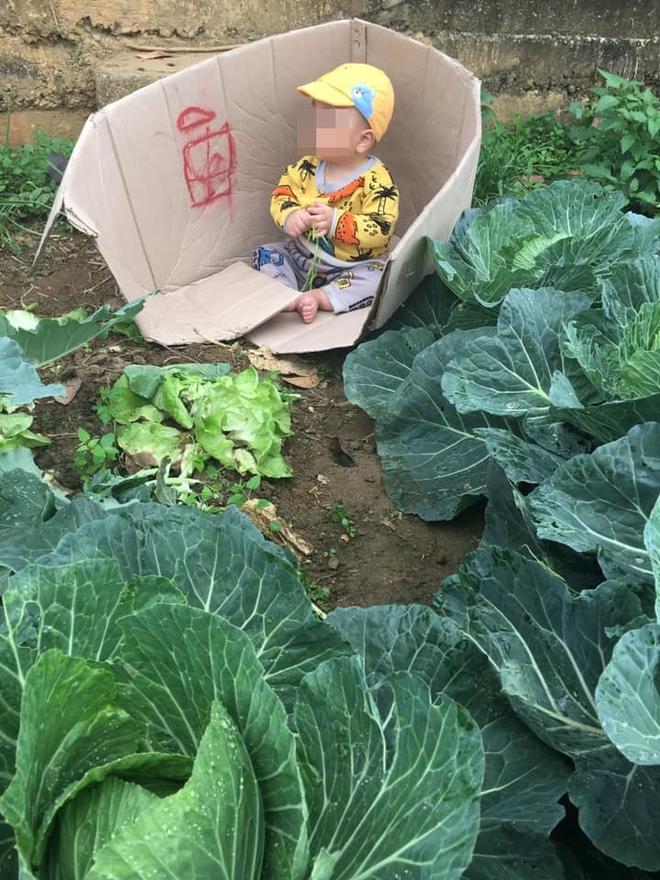 Người mẹ bê thùng các - tông đặc biệt ra vườn bắp cải, điều bất ngờ bên trong khiến tất cả lặng người - Ảnh 1.