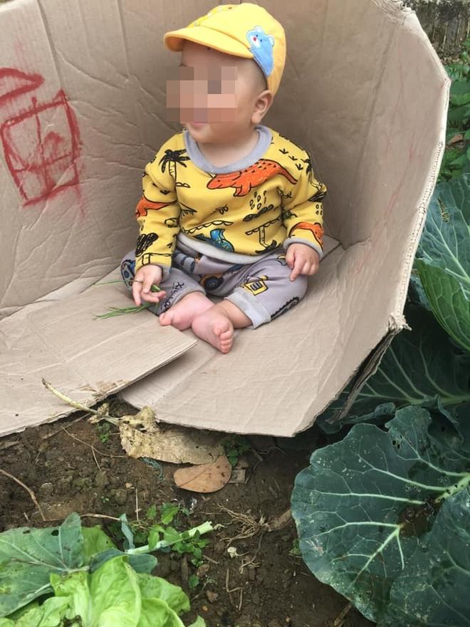 Người mẹ bê thùng các - tông đặc biệt ra vườn bắp cải, điều bất ngờ bên trong khiến tất cả lặng người - Ảnh 2.