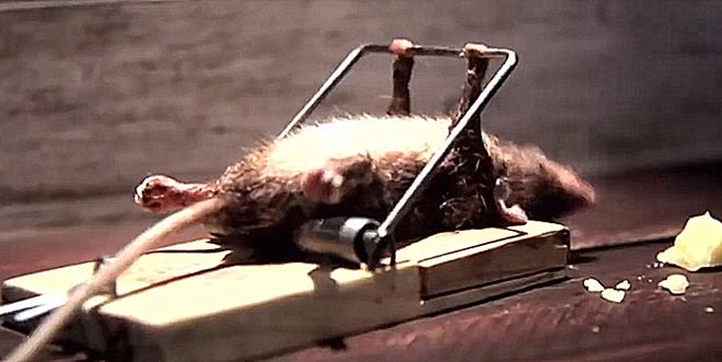 Đặt bẫy bắt được chuột nhưng khi chứng kiến cảnh tượng diễn ra trước mắt, chàng trai từ bỏ ngay ý định kết liễu con vật - Ảnh 2.