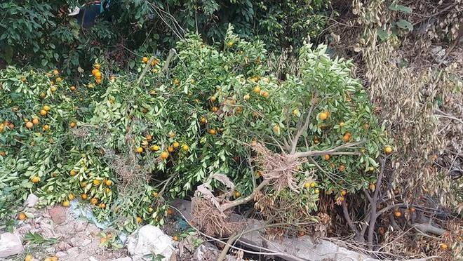 Nỗi đau sau Tết: Cây cảnh ế đầy vườn, nông dân ôm nợ - Ảnh 4.