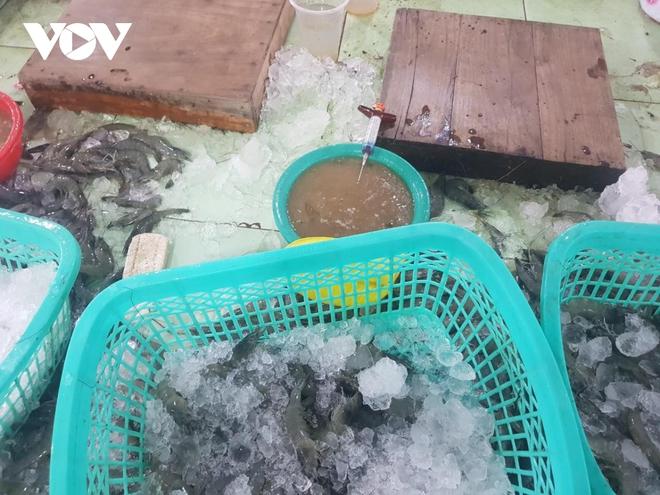 Kiên Giang phát hiện xử phạt 1 cơ sở bơm tạp chất vào tôm - Ảnh 2.