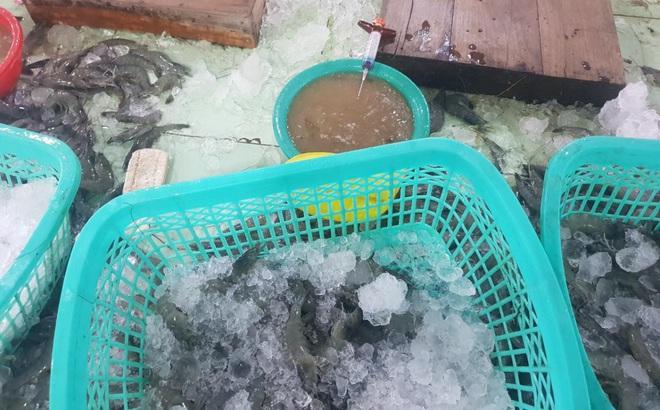 Kiên Giang phát hiện xử phạt 1 cơ sở bơm tạp chất vào tôm