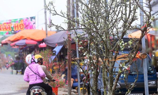 Người Hà Nội mạnh tay chi tiền triệu mua hoa lê trắng, gốc xù xì chơi sau Tết - Ảnh 4.