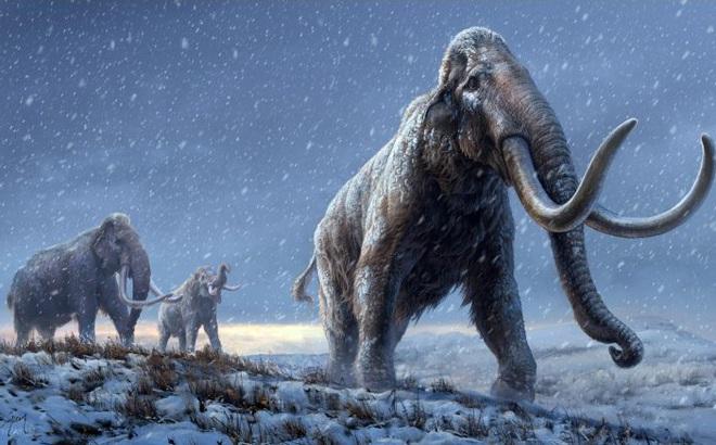 """DNA cổ nhất thế giới - 1,2 triệu năm tuổi - tiết lộ """"sự trỗi dậy"""" của loài động vật khổng lồ 12 tấn"""