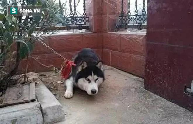 Bỏ ra 11 triệu đồng mua con chó về canh cửa giữ nhà, một thời gian sau, chủ nhà mới phát hiện ra 1 sự thật đắng lòng về con vật - Ảnh 2.