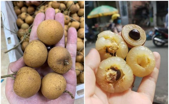 Có thể bạn chưa biết: Việt Nam có loại nhãn lạ, cùi cuộn như bắp cải, giá cao gấp 5 lần nhãn thường vẫn được săn lùng