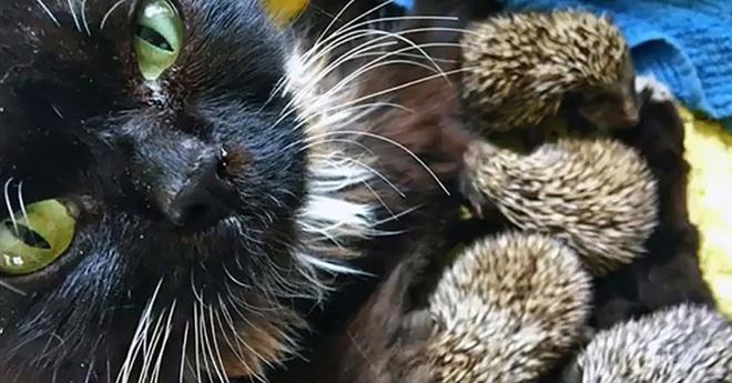 Mèo cưng biệt tăm biệt tích mấy tháng mới trở về, cô gái choáng váng với cảnh tượng trước mắt, không hiểu chuyện gì xảy ra - Ảnh 8.