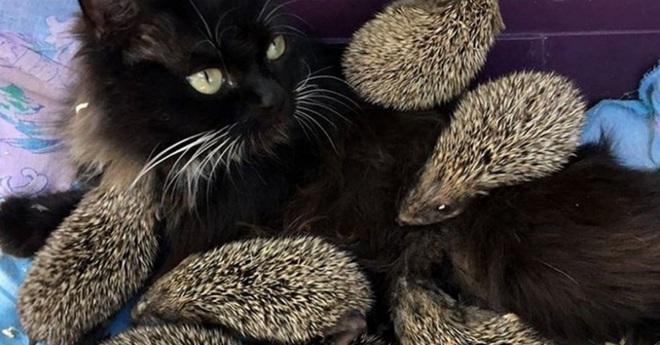Mèo cưng biệt tăm biệt tích mấy tháng mới trở về, cô gái choáng váng với cảnh tượng trước mắt, không hiểu chuyện gì xảy ra - Ảnh 9.
