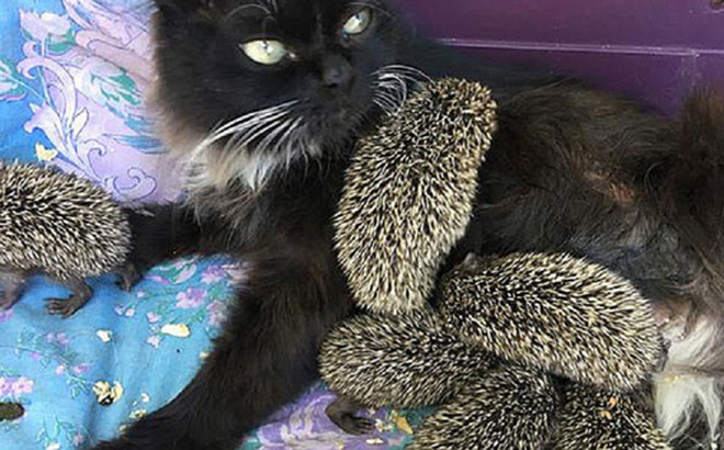 Mèo cưng biệt tăm biệt tích mấy tháng mới trở về, cô gái choáng váng với cảnh tượng trước mắt, không hiểu chuyện gì xảy ra