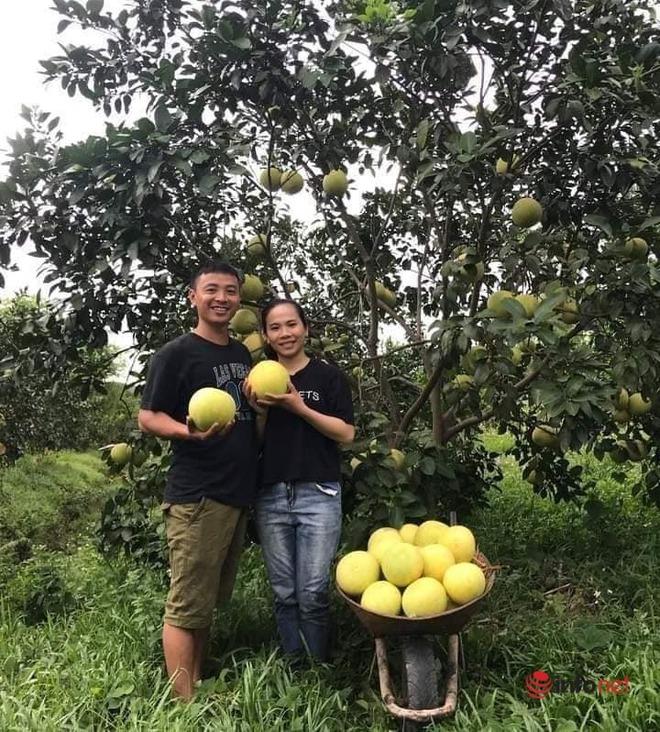 Về quê, bán hết vàng cưới, cặp vợ chồng trẻ trồng bưởi sinh thái, nuôi ong làm giàu - Ảnh 1.