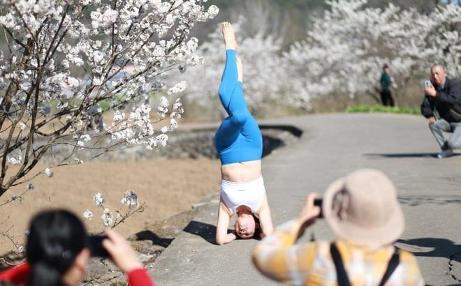 24h qua ảnh: Cô gái tập yoga cạnh cây hoa anh đào nở rộ