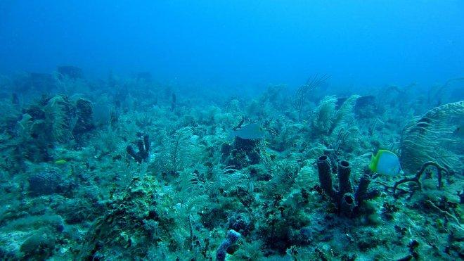 Phát hiện bí ẩn nằm trong đại dương có thể là lời giải cho bài toán điều trị COVID-19 - Ảnh 1.