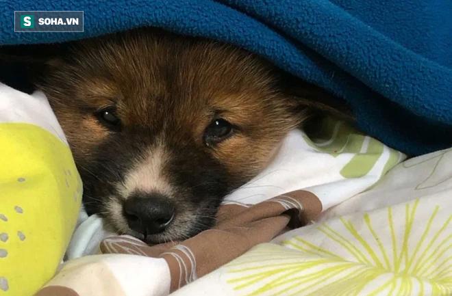 Đem chú chó con đi lạc về nhà nuôi, 1 tháng sau, chủ nhà kinh ngạc khi nghe tin từ bác sĩ thú ý, phải đổi chủ cho con vật - Ảnh 2.