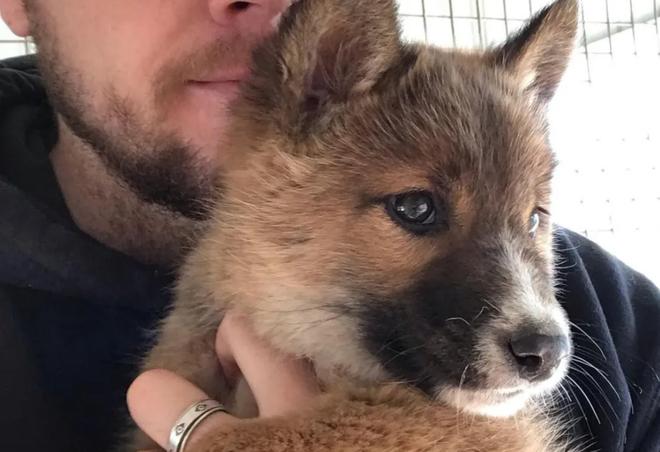 Đem chú chó con đi lạc về nhà nuôi, 1 tháng sau, chủ nhà kinh ngạc khi nghe tin từ bác sĩ thú ý, phải đổi chủ cho con vật - Ảnh 4.