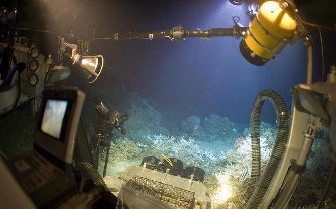 """Phát hiện """"bí ẩn"""" nằm trong đại dương có thể là lời giải cho bài toán điều trị COVID-19"""