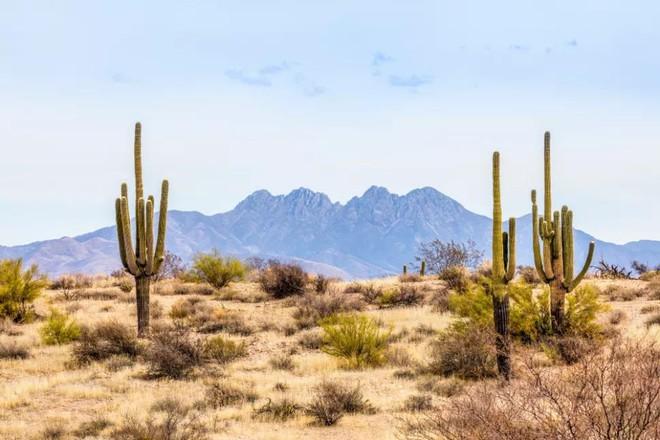 Nóng bức ban ngày, lạnh âm độ ban đêm: Vì sao nhiệt độ trên sa mạc lại biến đổi khôn lường tới vậy? - Ảnh 3.