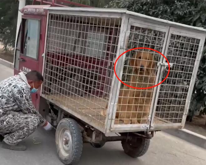 Giải cứu con chó đang bị đưa đến lò mổ, cảnh tượng xuất hiện hôm sau khiến người đàn ông mừng như bắt được vàng - Ảnh 2.
