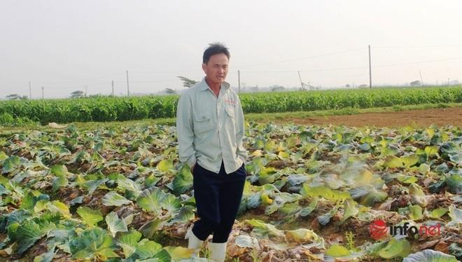 Bán cả xe 200-300 bắp cải được 100 nghìn đồng, dân Nghệ An 'khóc ròng' - Ảnh 3.
