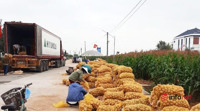 Bán cả xe 200-300 bắp cải được 100 nghìn đồng, dân Nghệ An 'khóc ròng' - Ảnh 5.