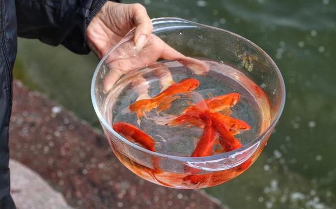 Thả cá chép ngày ông Công ông Táo vào giờ nào?