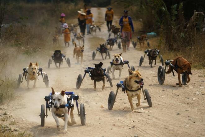 7 ngày qua ảnh: Xúc động chó khuyết tật tập thể dục hàng ngày - Ảnh 2.