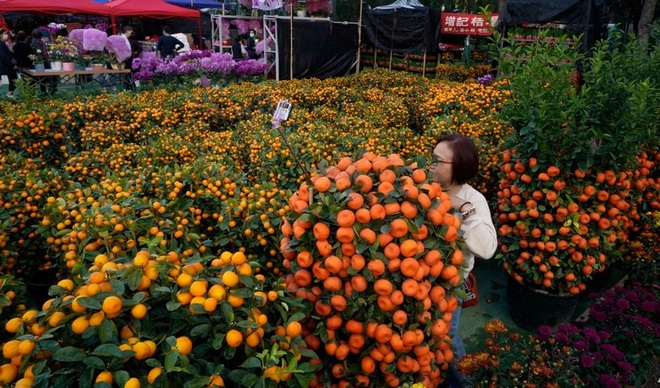 24h qua ảnh: Người phụ nữ chụp ảnh với vườn quất ở Hong Kong - Ảnh 2.