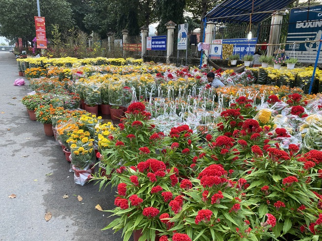 Người bán hoa Tết ở TP HCM muốn khóc sau trận mưa bất ngờ - Ảnh 1.