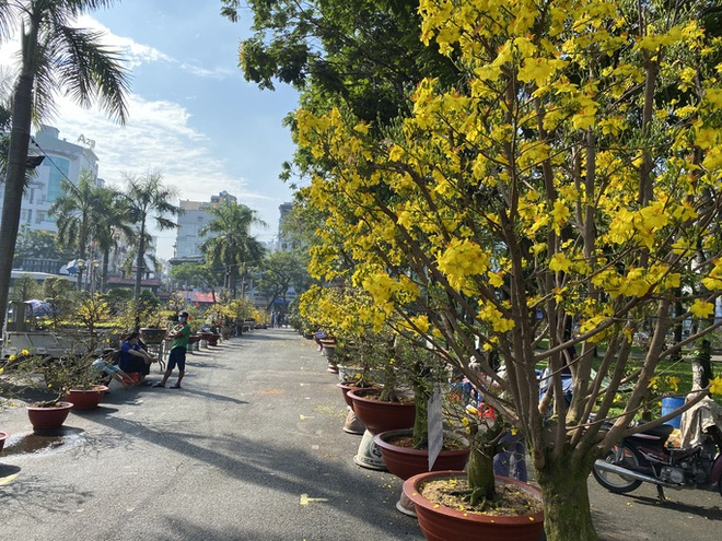 28 Tết, người bán hoa Tết ở TP HCM muốn khóc sau trận mưa bất ngờ - Ảnh 3.
