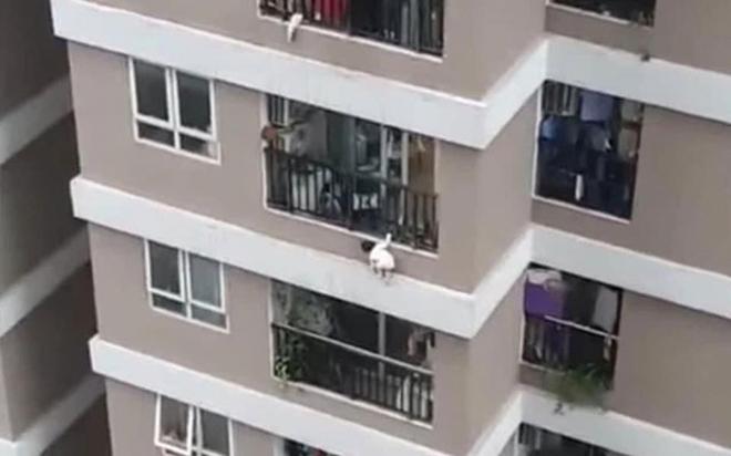 Hiện trường khu vực bé gái 3 tuổi rơi từ tầng 12A chung cư ở Hà Nội - Ảnh 1.