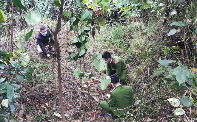Nhóm trộm tàn ác, dùng muối nhử hàng chục con trâu bò của dân vào rừng rồi xẻ thịt mang đi bán