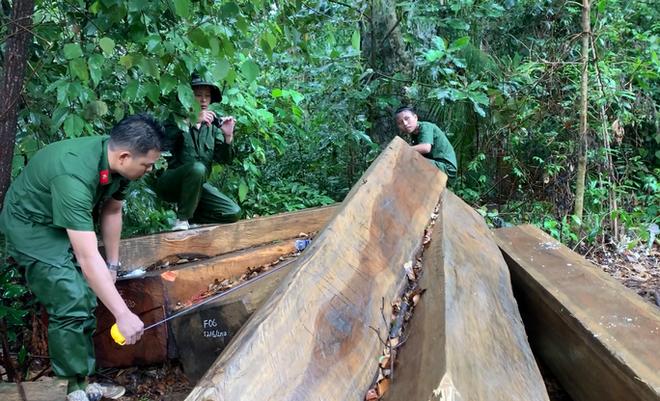 Lại phát hiện vụ phá rừng lớn, thu gần 40m3 gỗ ở Đắk Lắk - Ảnh 2.