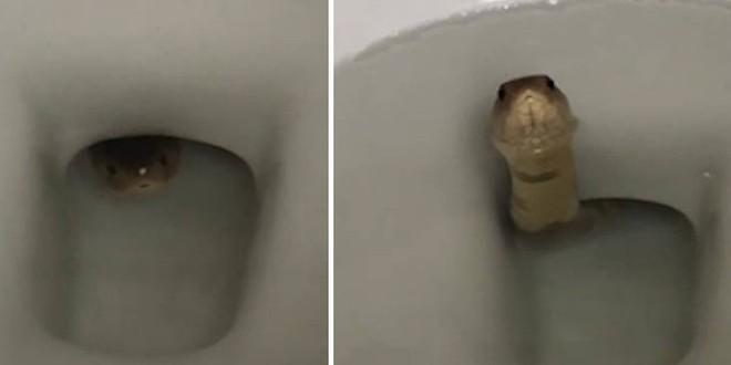 Vừa vào nhà vệ sinh đã phát hiện âm thanh lạ và 1... đôi mắt trong bồn cầu, người phụ nữ sợ đứng tim, thất thanh gọi chồng  - Ảnh 5.