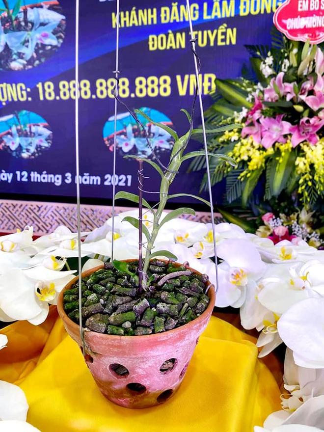 Xôn xao hình ảnh buổi lễ nhượng bán hoa lan 5 cánh trắng với giá gần 19 tỷ đồng ở Hà Nam - Ảnh 1.