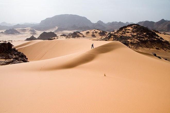 Bạn có biết sa mạc Sahara từng có cây cối xanh rờn với hươu cao cổ và cá sấu? - Ảnh 1.